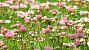 4 partages biblique de carême : « D'un jardin à l'Autre »